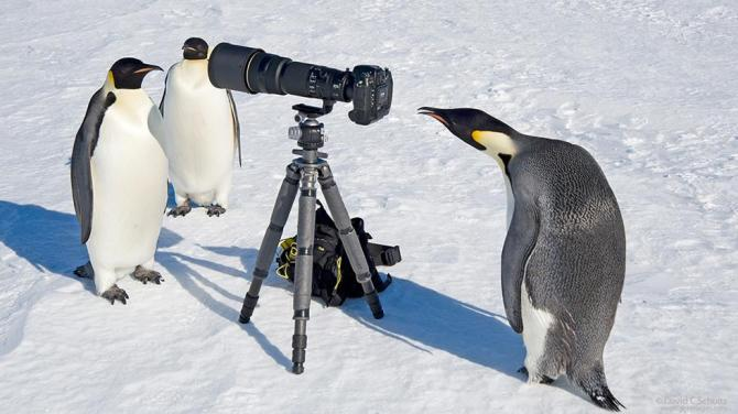 Photographer David C. Schultz Captures Stunning Images of Nature from Antarctica to the American West PHOTOS - weather.com