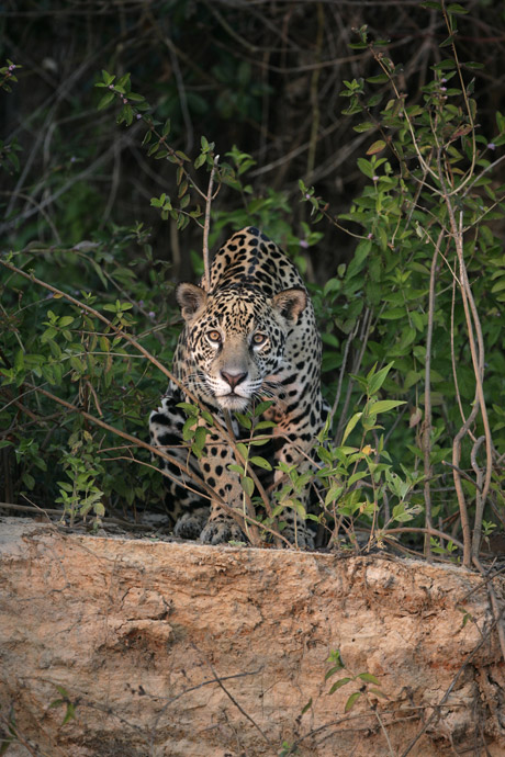 Brazil wildlife holidays: in search of the Big Five - Telegraph