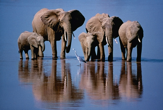 50 Years of Wildlife Photographer of the Year – in pictures | Environment | The Guardian
