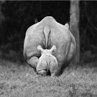 African wildlife photography by David Gulden – in pictures | Art and design | The Guardian