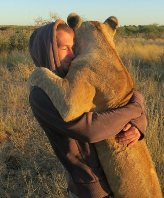 The lion hugger